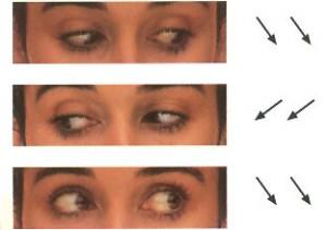 oculares2-300x211
